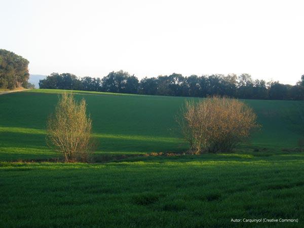 Camps-Caldes-de-Malavella